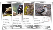 Animal Cards of Australia/Oceania (Red) - Printable Montessori science materials by Montessori Print Shop.