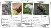 Animal Cards of Europe (Red) - Printable Montessori science materials by Montessori Print Shop.
