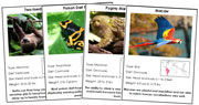 Animals of South America - Printable Montessori science materials by Montessori Print Shop.