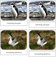 Antarctica Safari Toob Cards - Printable Montessori Toob Cards by Montessori Print Shop.