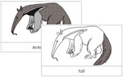 Anteater Nomenclature Cards - Printable Montessori nomenclature cards by Montessori Print Shop.