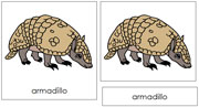 Armadillo Nomenclature Cards - Printable Montessori nomenclature cards by Montessori Print Shop.