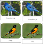 Backyard Birds Safari Toob Cards - Printable Montessori Toob Cards by Montessori Print Shop.