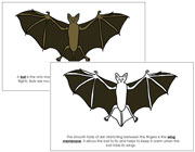 Bat Nomenclature Book - Printable Montessori Nomenclature Materials by Montessori Print Shop.