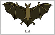 Bat Nomenclature Cards - Printable Montessori nomenclature cards by Montessori Print Shop.