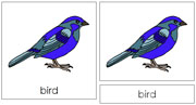 Bird Nomenclature Cards - Printable Montessori nomenclature cards by Montessori Print Shop.