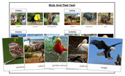 Animal Adaptation: Birds & Feet - Printable Montessori science materials by Montessori Print Shop.
