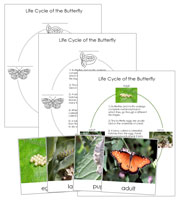 Butterfly Life Cycle Cards - Printable Montessori materials by Montessori Print Shop.