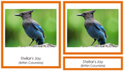 Canadian Provincial Birds 3-Part Cards - Printable Montessori geography materials by Montessori Print Shop.