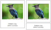 Canadian Provincial Birds 3-Part Cards (no color borders) - Printable Montessori geography materials by Montessori Print Shop.