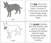 Dog Nomenclature Book - Printable Montessori Nomenclature Materials by Montessori Print Shop.