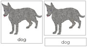 Dog Nomenclature Cards - Printable Montessori nomenclature cards by Montessori Print Shop.