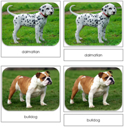 Dogs Safari Toob Cards - Printable Montessori Toob Cards by Montessori Print Shop.