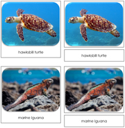 Endangered Species (Marine) Safari Toob Cards - Printable Montessori Toob Cards by Montessori Print Shop.