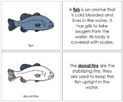 Fish Nomenclature Book - Printable Montessori Nomenclature Materials by Montessori Print Shop.