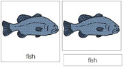 Fish Nomenclature Cards - Printable Montessori nomenclature cards by Montessori Print Shop.