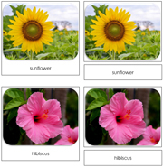 Flowers Safari Toob Cards - Printable Montessori Toob Cards by Montessori Print Shop.
