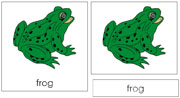 Frog Nomenclature Cards - FREE Printable Montessori Nomenclature Materials by Montessori Print Shop.