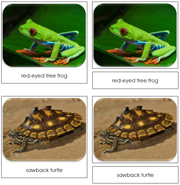 Frogs and Turtles Safari Toob Cards - Printable Montessori Toob Cards by Montessori Print Shop.