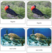 Galapagos Safari Toob Cards - Printable Montessori Toob Cards by Montessori Print Shop.
