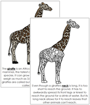 Giraffe Nomenclature Book - Printable Montessori Nomenclature Materials by Montessori Print Shop.