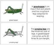 Grasshopper Nomenclature Book - Printable Montessori Nomenclature Materials by Montessori Print Shop.
