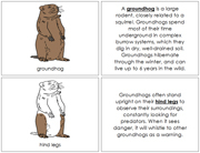 Groundhog Nomenclature Book - Printable Montessori Nomenclature Materials by Montessori Print Shop.