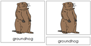 Groundhog Nomenclature Cards - Printable Montessori nomenclature cards by Montessori Print Shop.