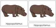 Hippopotamus Nomenclature Cards - Printable Montessori nomenclature cards by Montessori Print Shop.