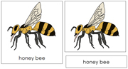 Honey Bee Nomenclature Cards - Printable Montessori nomenclature cards by Montessori Print Shop