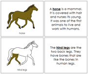 Horse Nomenclature Book - Printable Montessori Nomenclature Materials by Montessori Print Shop.
