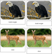 In The Woods Safari Toob Cards - Printable Montessori Toob Cards by Montessori Print Shop.