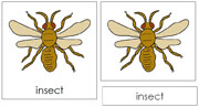 Insect Nomenclature Cards - Printable Montessori nomenclature cards by Montessori Print Shop.