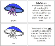 Jellyfish Nomenclature Book - Printable Montessori Nomenclature Materials by Montessori Print Shop.