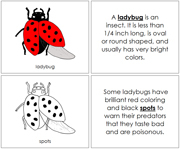 Ladybug Nomenclature Book - Printable Montessori Nomenclature Materials by Montessori Print Shop.