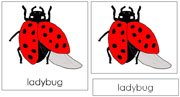Ladybug Nomenclature Cards - Printable Montessori nomenclature cards by Montessori Print Shop.