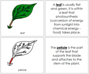 Leaf Nomenclature Book (Red) - Printable Montessori Nomenclature Materials by Montessori Print Shop.