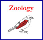 Montessori Zoology Nomenclature Cards (red highlights)