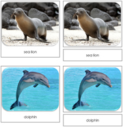 Ocean Safari Toob Cards - Printable Montessori Toob Cards by Montessori Print Shop.