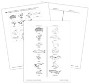 Oviparous or Viviparous Animals? - Blackline Masters - printable Montessori science materials by Montessori Print Shop