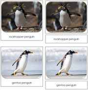 Penguins Safari Toob Cards - Printable Montessori Toob Cards by Montessori Print Shop.