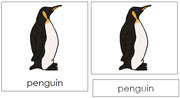Penguin Nomenclature Cards - Printable Montessori nomenclature cards by Montessori Print Shop.