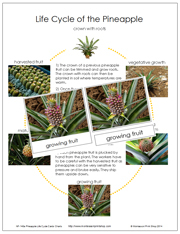 Pineapple Life Cycle Cards - Printable Montessori Nomenclature Cards by Montessori Print Shop