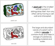 Plant Cell Nomenclature Book - Printable Montessori Nomenclature Materials by Montessori Print Shop.