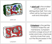 Plant Cell Nomenclature Book (in red) - Printable Montessori Nomenclature Materials by Montessori Print Shop.