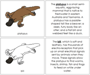 Platypus Nomenclature Book - Printable Montessori Nomenclature Materials by Montessori Print Shop.