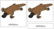 Platypus Nomenclature Cards - Printable Montessori nomenclature cards by Montessori Print Shop.