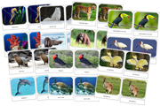 Safari Toob Cards - Printable Montessori materials by Montessori Print Shop