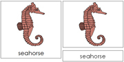 Seahorse Nomenclature Cards - Printable Montessori Nomenclature Materials by Montessori Print Shop.