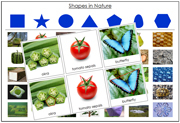 Shapes in Nature Sorting Cards - Printable Montessori science materials by Montessori Print Shop.